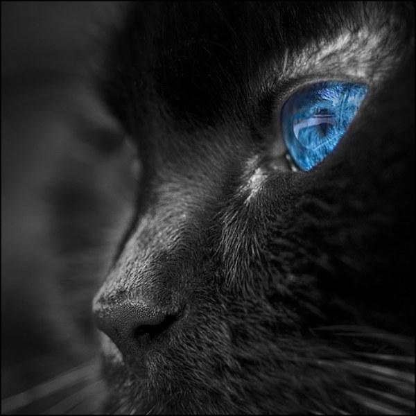 Глаза кошки 3