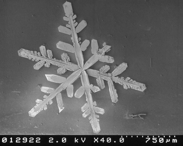neige-microscope-flocon-17.jpg