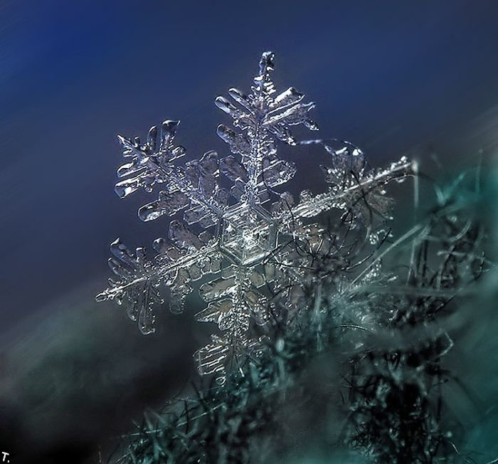 http://pulson.ru/wp-content/uploads/2011/09/Stunning_snowflakes_photos_1.jpg