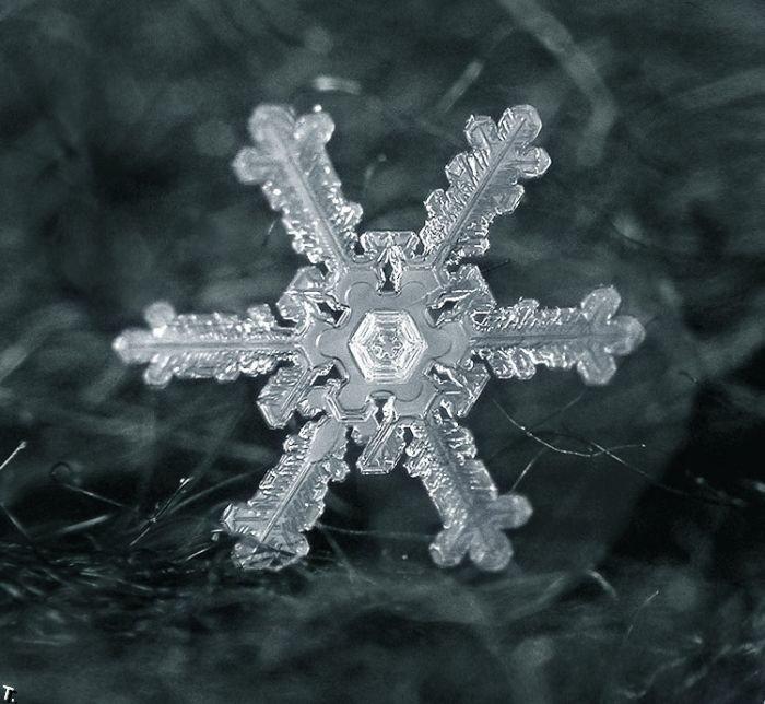 http://pulson.ru/wp-content/uploads/2011/09/Stunning_snowflakes_photos_14.jpg