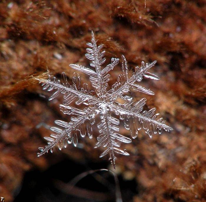 http://pulson.ru/wp-content/uploads/2011/09/Stunning_snowflakes_photos_15.jpg