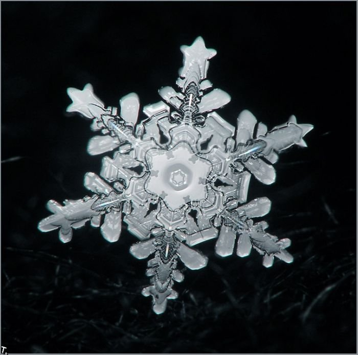 http://pulson.ru/wp-content/uploads/2011/09/Stunning_snowflakes_photos_18.jpg