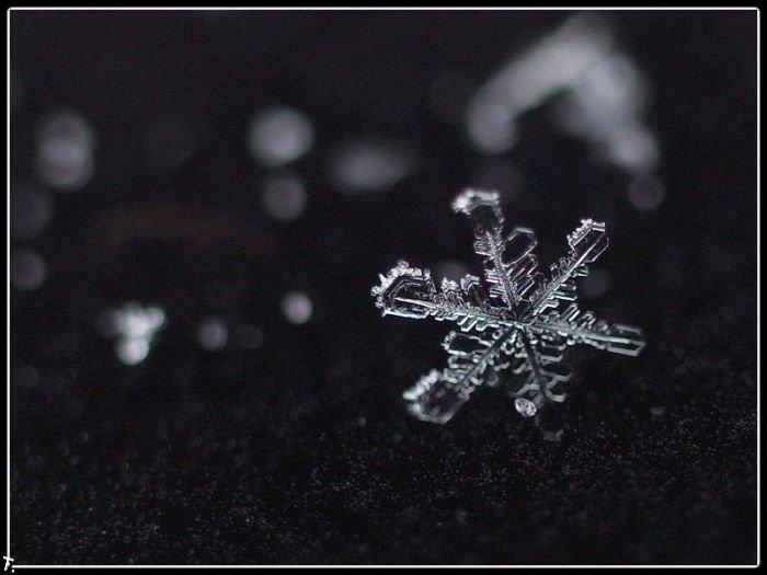 http://pulson.ru/wp-content/uploads/2011/09/Stunning_snowflakes_photos_2.jpg
