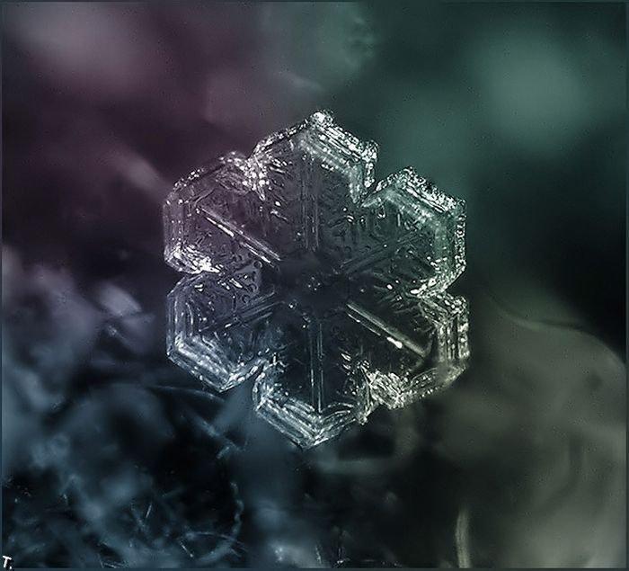 http://pulson.ru/wp-content/uploads/2011/09/Stunning_snowflakes_photos_7.jpg