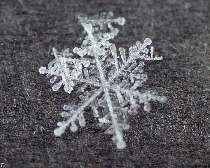 http://pulson.ru/wp-content/uploads/2011/09/Stunning_snowflakes_photos_9.jpg