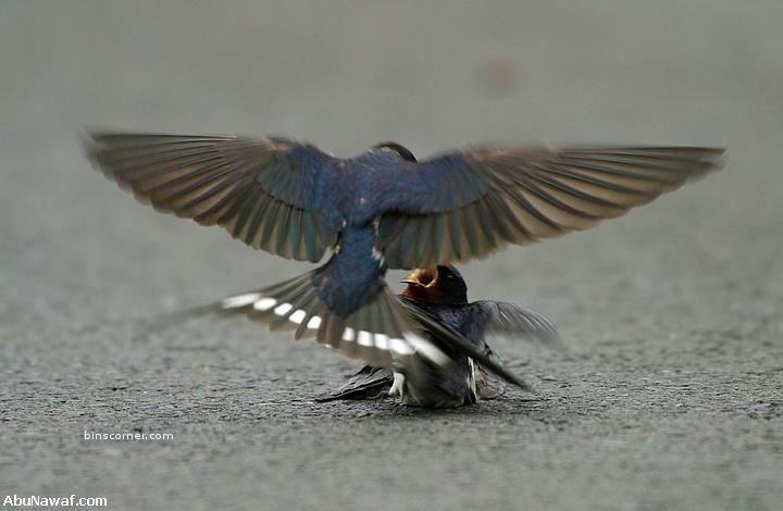 История птицы и их чувства 6 фото