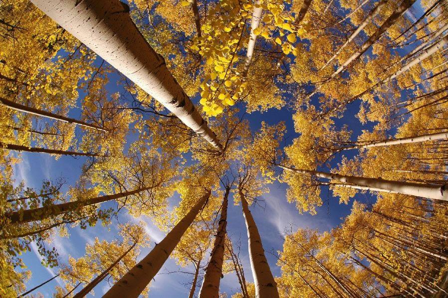 http://pulson.ru/wp-content/uploads/2011/12/14-1.jpg