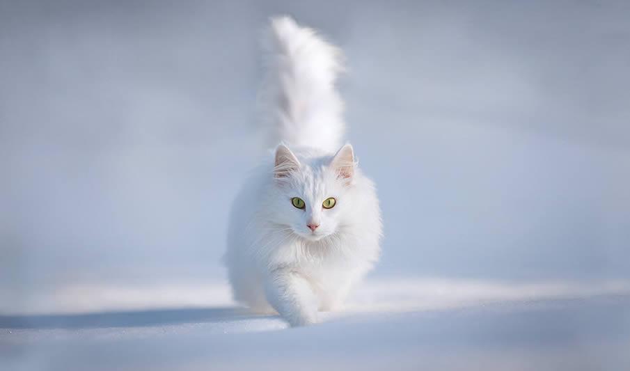 http://pulson.ru/wp-content/uploads/2011/12/45.jpg