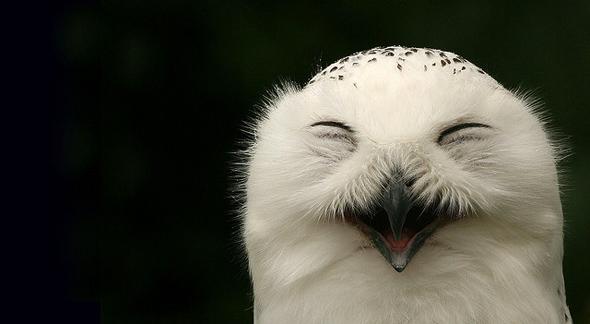 прикольные фотографии совы (1)