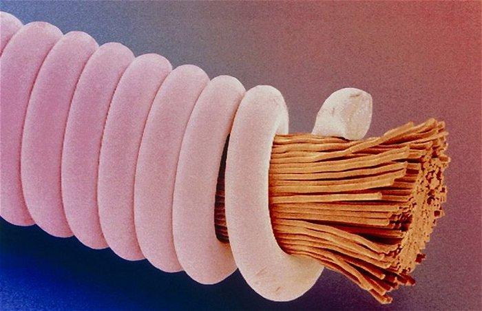 бытовые вещи под микроскопом хрущевке