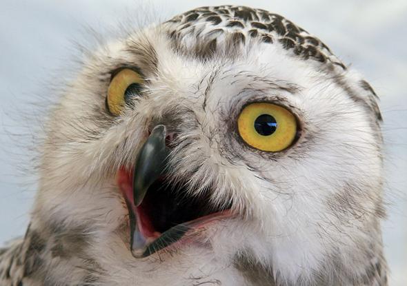 прикольные фотографии совы (5)