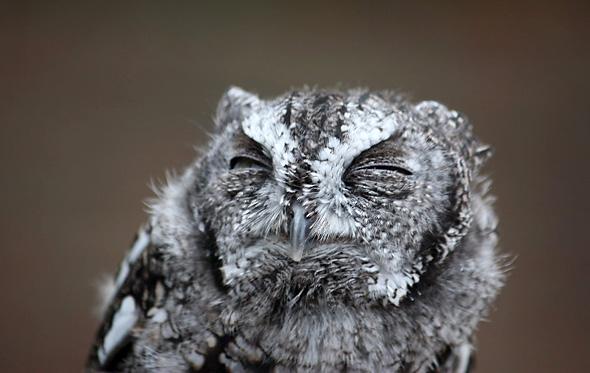 прикольные фотографии совы (7)
