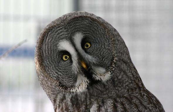 Смешные совы 21 фото негани