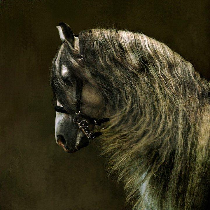 Красивые лошади фото арабских