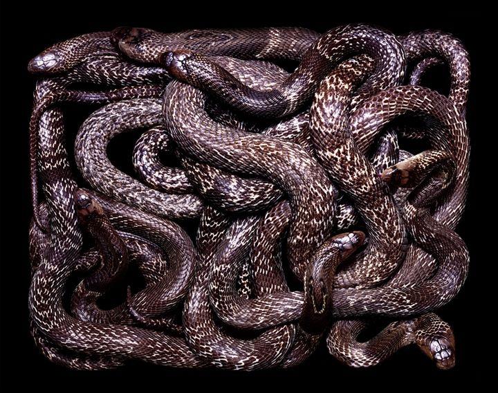 http://pulson.ru/wp-content/uploads/2012/04/pulson0418.jpg