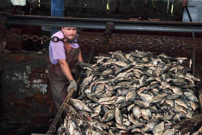 рыболовный промысел в астрахани