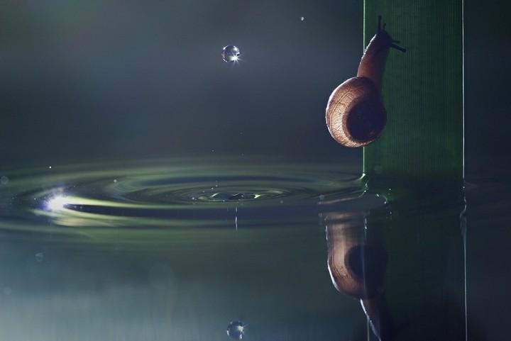 http://pulson.ru/wp-content/uploads/2012/12/pulson076.jpg