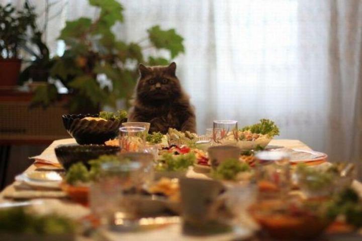 Прикольное фото, кот сидит за накрытым столом и смотрит на еду