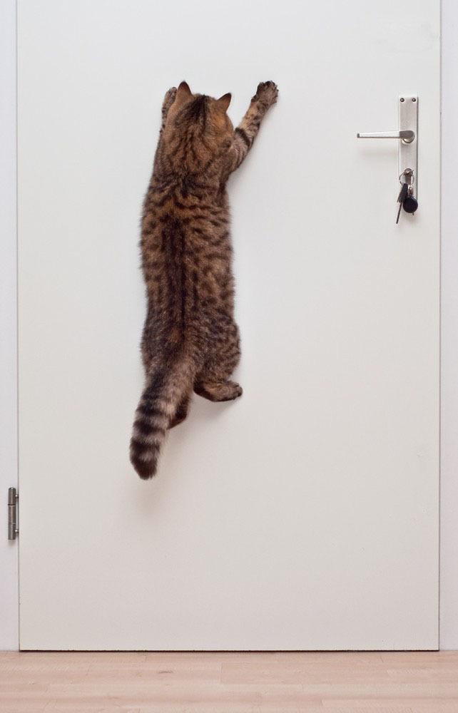 Красивые фотографии кошек (17)
