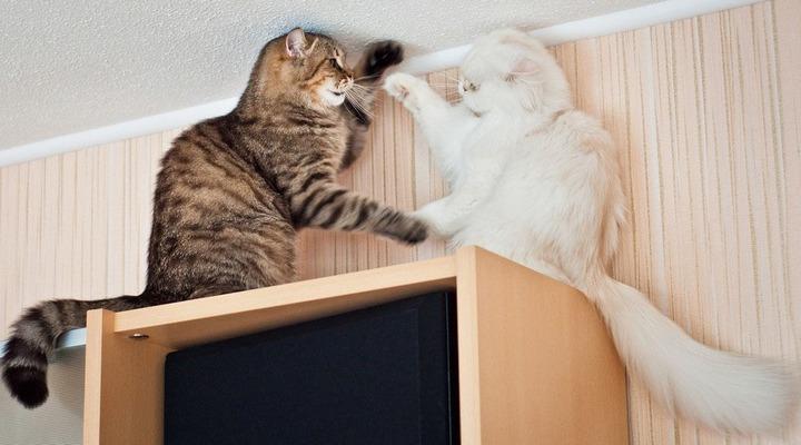 Красивые фотографии кошек (14)