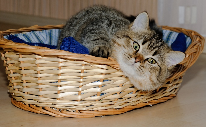 Красивые фотографии кошек (11)