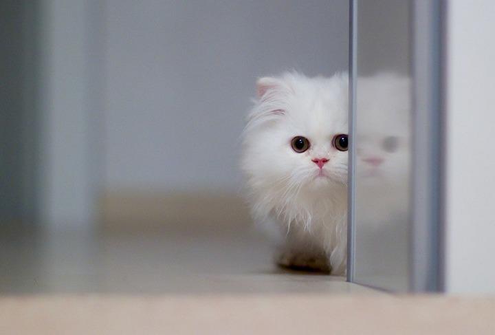 Красивые фотографии кошек (9)