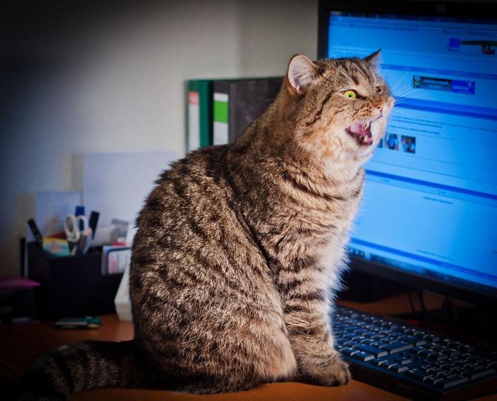 Красивые фотографии кошек (3)