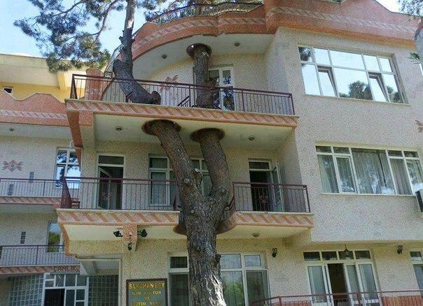 Дерево через балконы