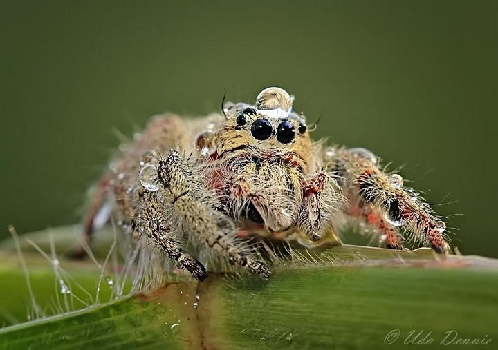 красивые макро фотографии пауков (8)