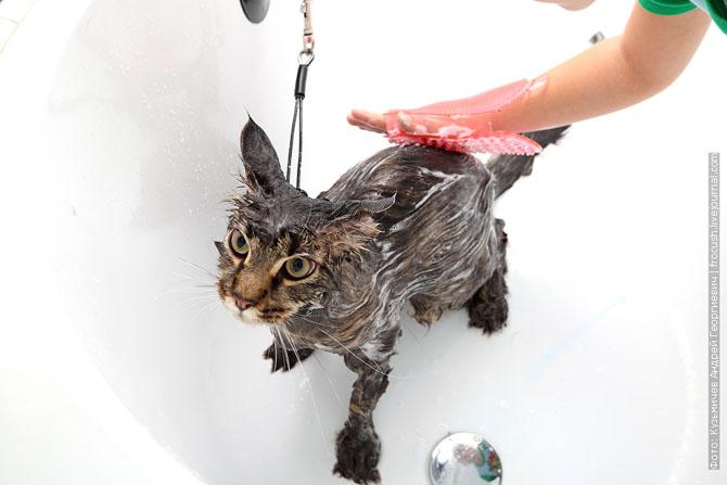Как нужно правильно мыть кошку, как помыть кошку (12)