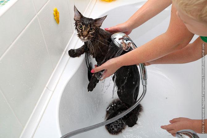 Как нужно правильно мыть кошку, как помыть кошку (17)