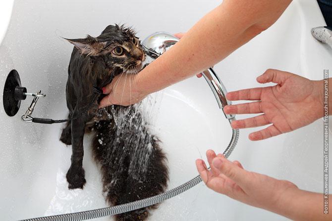 Как нужно правильно мыть кошку, как помыть кошку (18)