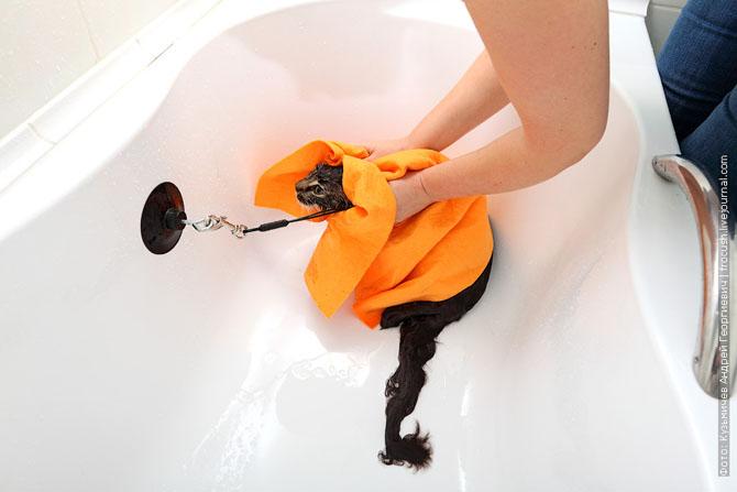 Как нужно правильно мыть кошку, как помыть кошку (20)