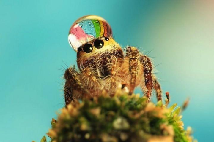 красивые макро фотографии пауков (7)