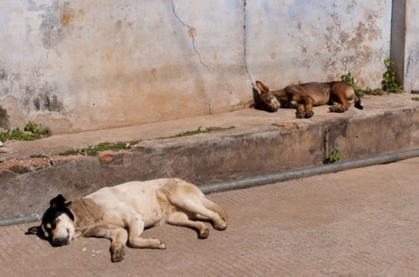 Как спят люди в Индии (11)