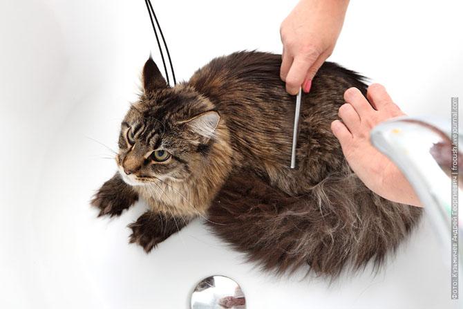 Как нужно правильно мыть кошку, как помыть кошку (3)