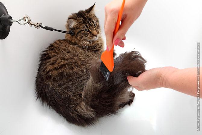 Как нужно правильно мыть кошку, как помыть кошку (6)