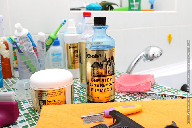 Как нужно правильно мыть кошку, как помыть кошку (8)