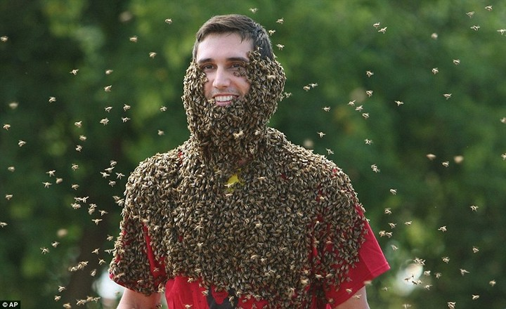 Фото пчелиных бород, экстрим (3)