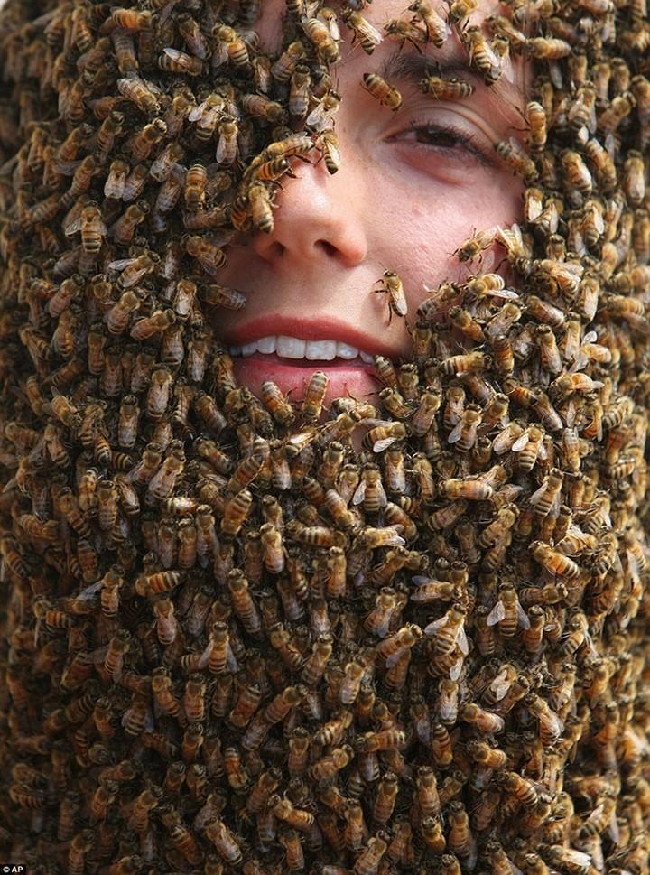 Фото пчелиных бород, экстрим (5)