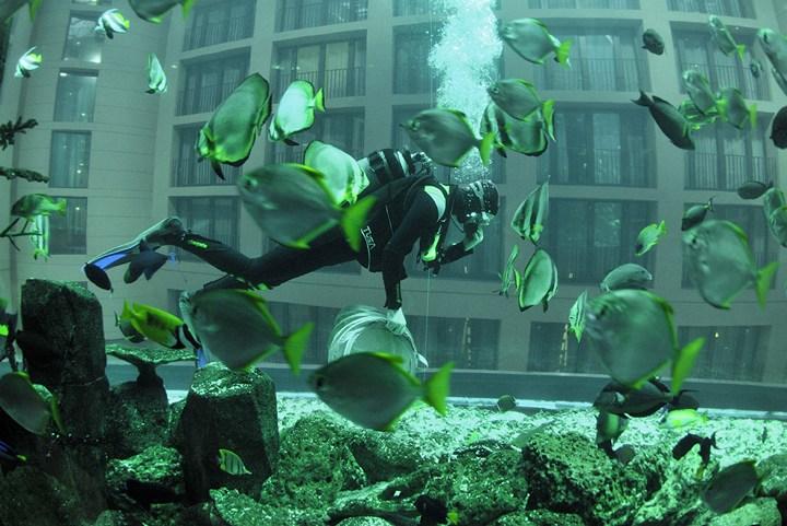 """Самый большой аквариум в отеле """"Radisson Blu"""", Германия (14)"""