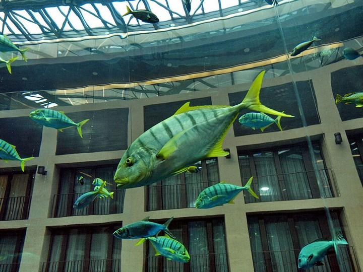 """Самый большой аквариум в отеле """"Radisson Blu"""", Германия (7)"""