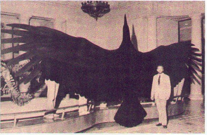 Самая большая птица, древний Тераторн