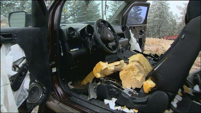 Медведи растерзали салон автомобиля (16)