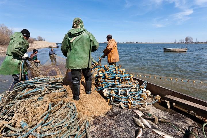 Как ловят рыбу в Астрахани (8)