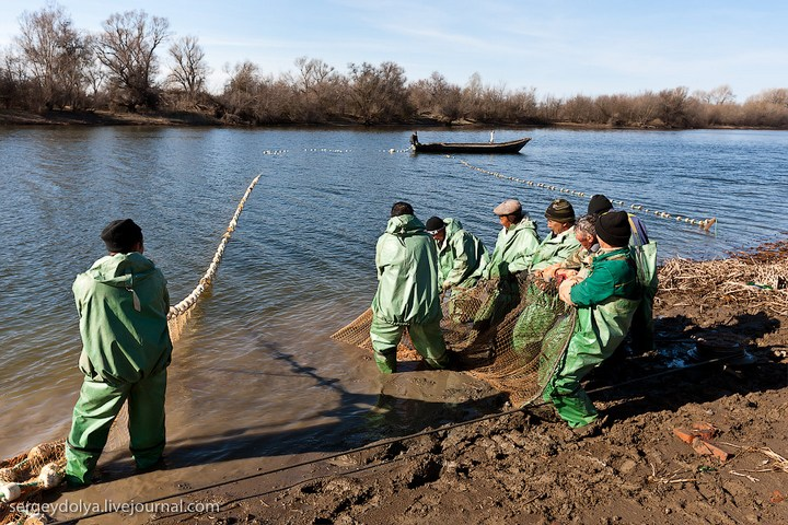 Как ловят рыбу в Астрахани (11)
