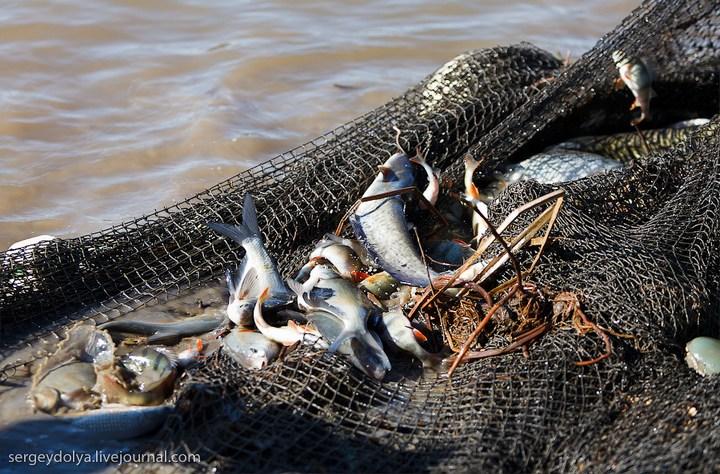 Как ловят рыбу в Астрахани (13)