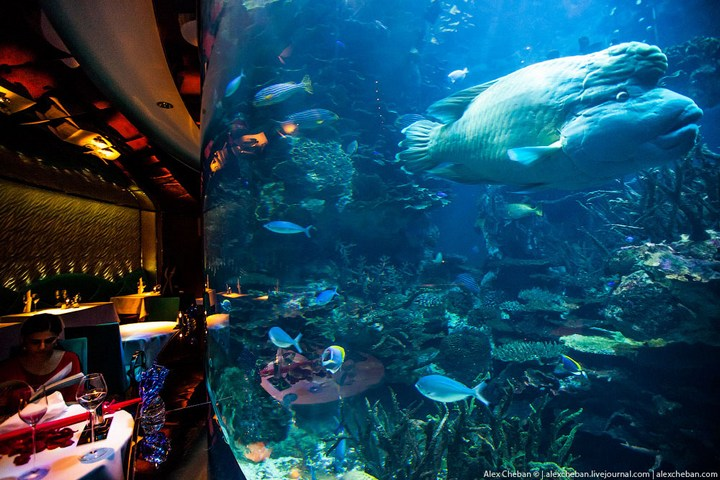 Необычный ресторан-аквариум в отеле «Бурж Аль Араб» (15)