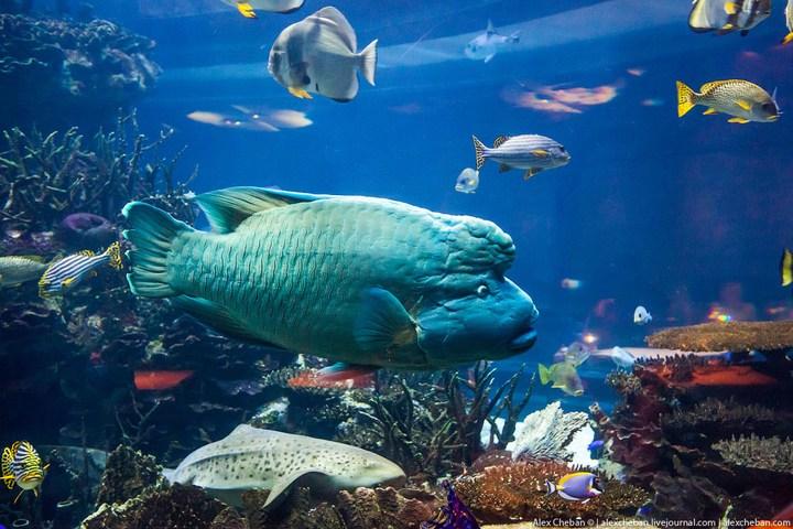 Необычный ресторан-аквариум в отеле «Бурж Аль Араб» (16)