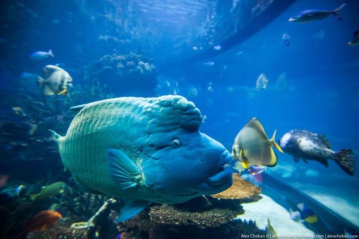 Необычный ресторан-аквариум в отеле «Бурж Аль Араб» (18)